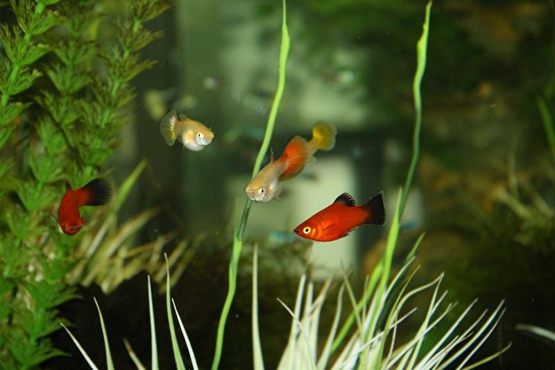 aquarium!!!! Web_po14