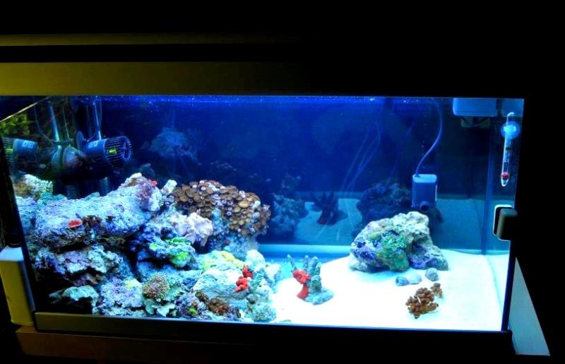 Récifal 150L Aquatlantis Aqua10