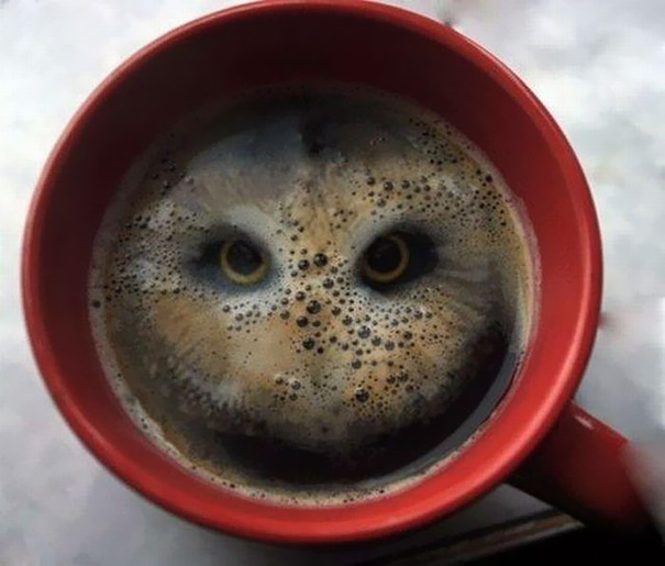 TASSES DE CAFE - Page 2 Owl10