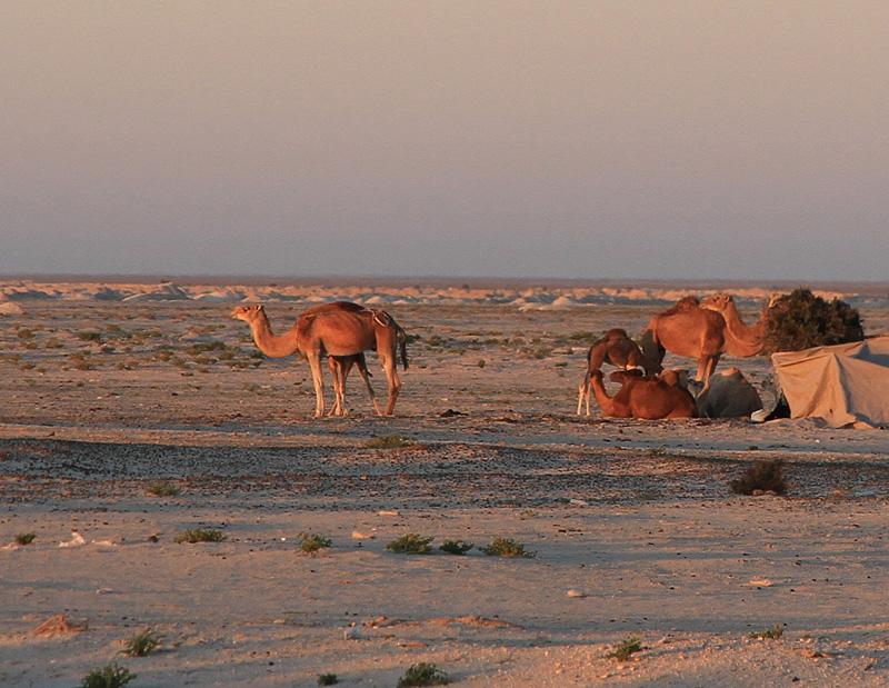 Maroc le sud Akjout12