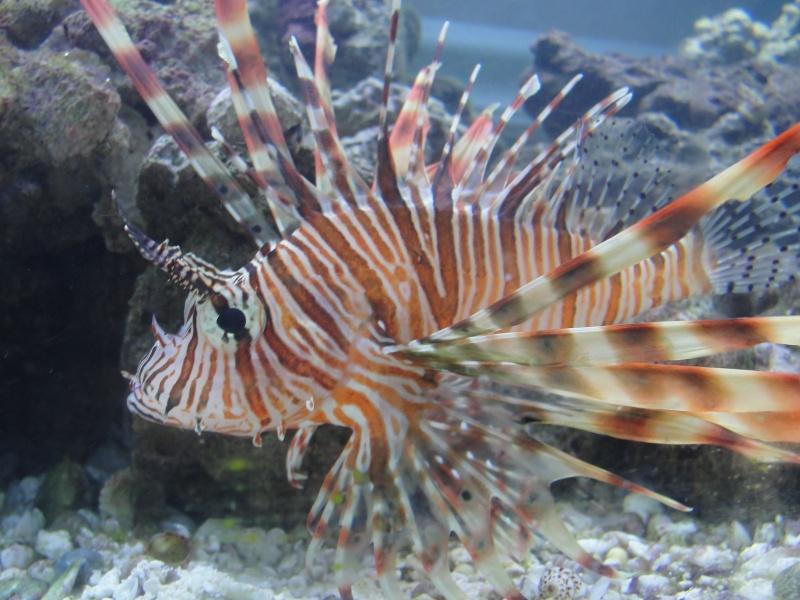 My lion fish changed colors! =-) Dsc03610