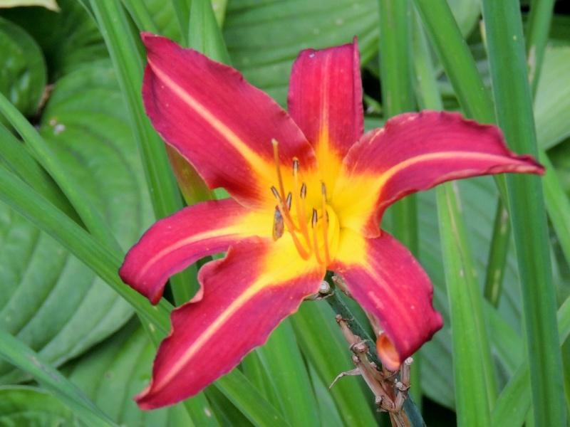 Фотографии цветов и деревьев - Страница 10 Dscn7220