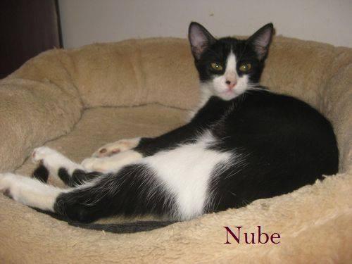NUBE - NOIRE ET BLANCHE - EN FA en Suisse 11950910