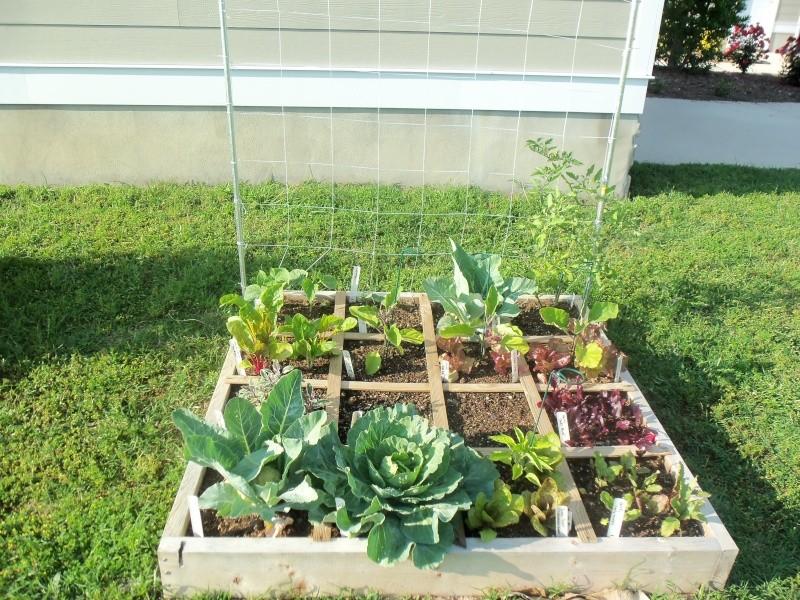 my garden pics 102_0412
