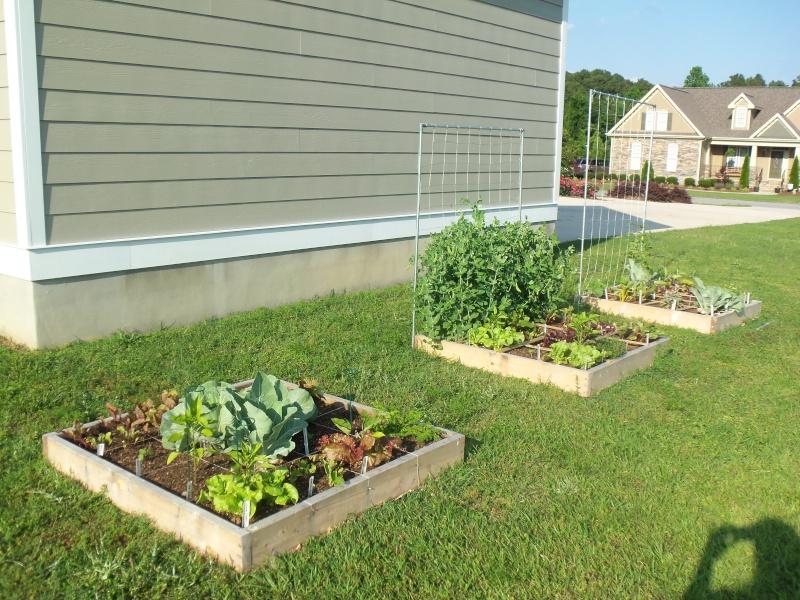 my garden pics 102_0413
