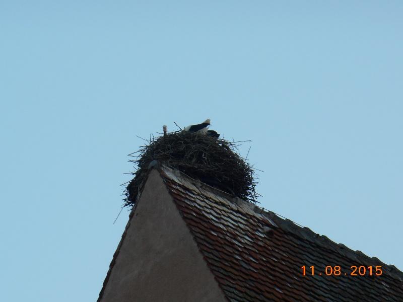 Equisheim (Francia) Dscn1066
