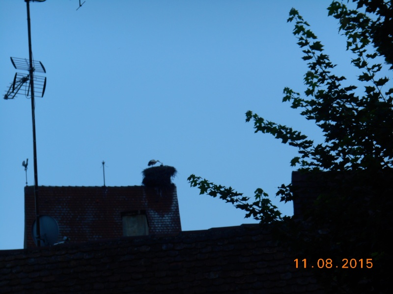 Equisheim (Francia) Dscn1070