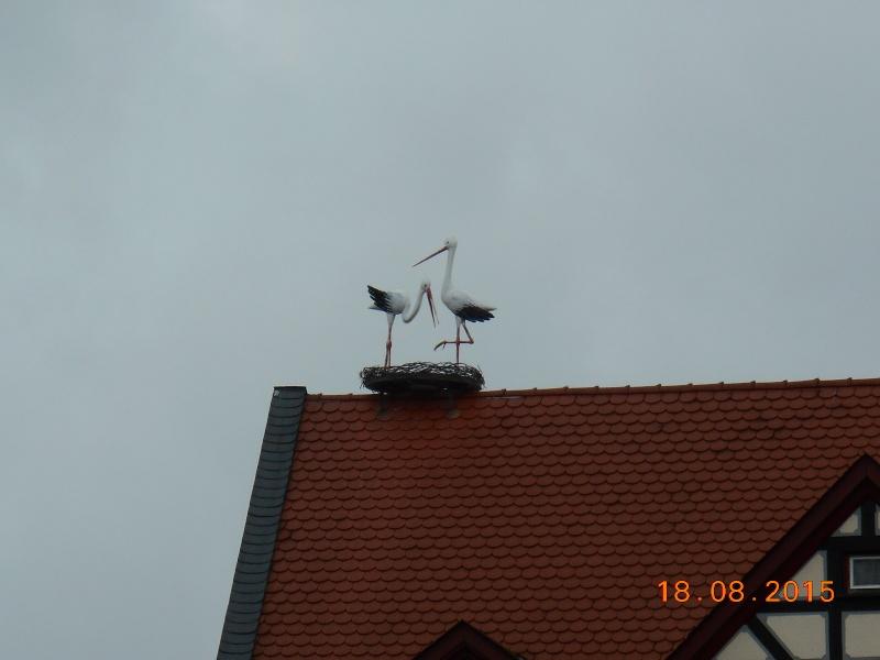 Gelnhausen (Germania) Dscn1174