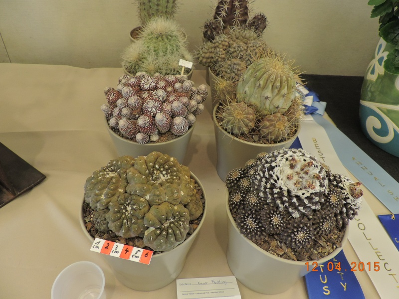 Cacti and Sukkulent in Köln, every day new flowers in the greenhouse Part 133 9045410