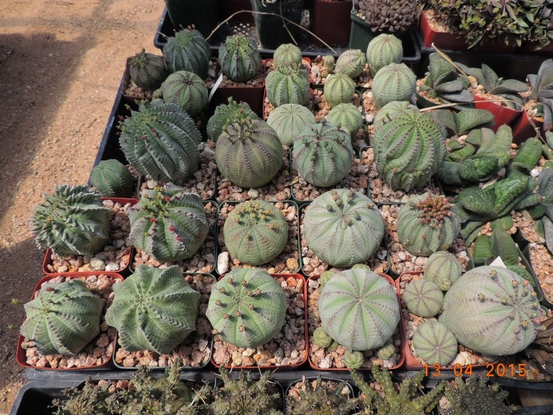 Cacti and Sukkulent in Köln, every day new flowers in the greenhouse Part 133 9074710