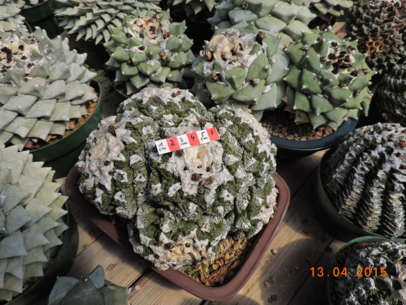 Cacti and Sukkulent in Köln, every day new flowers in the greenhouse Part 133 9075410