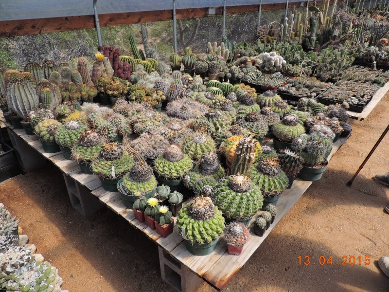 Cacti and Sukkulent in Köln, every day new flowers in the greenhouse Part 133 9075710