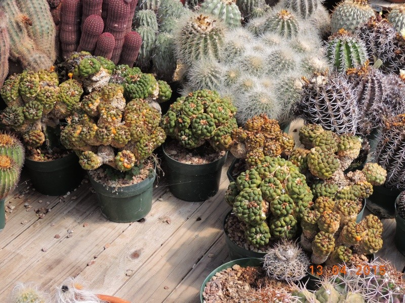 Cacti and Sukkulent in Köln, every day new flowers in the greenhouse Part 133 9076010