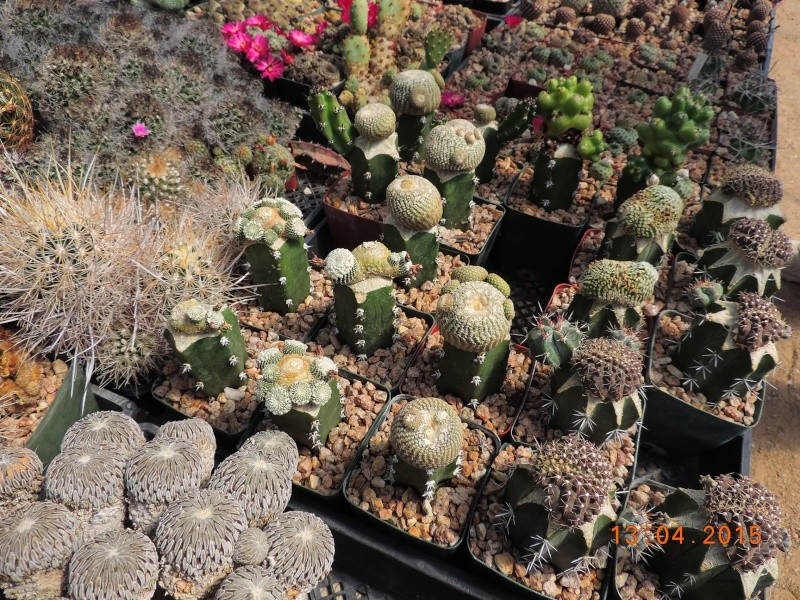 Cacti and Sukkulent in Köln, every day new flowers in the greenhouse Part 133 9077110