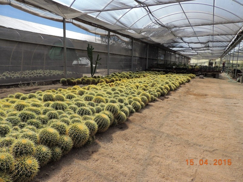 Cacti and Sukkulent in Köln, every day new flowers in the greenhouse Part 132 9114010