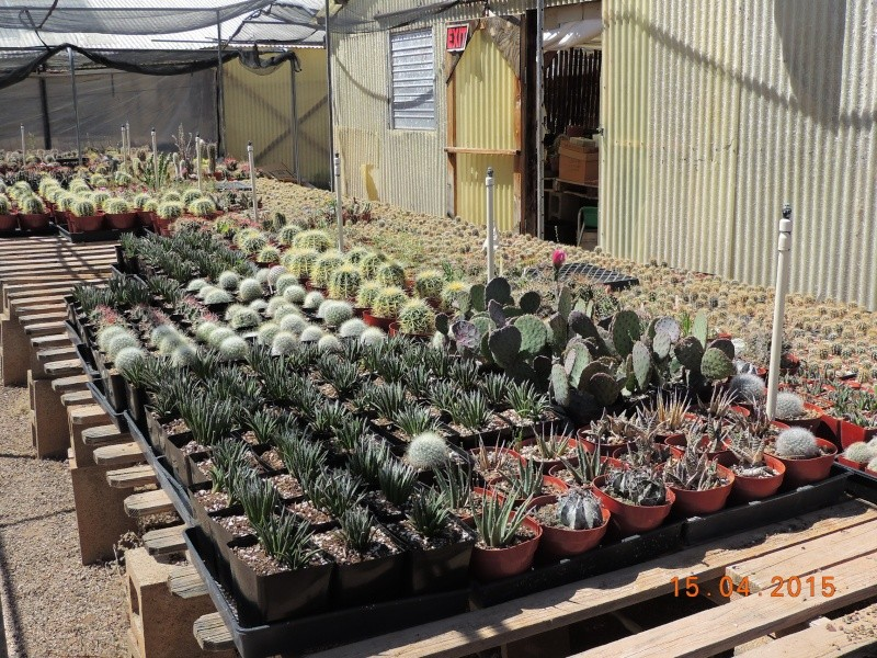 Cacti and Sukkulent in Köln, every day new flowers in the greenhouse Part 132 9118110
