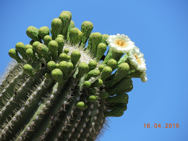 Cacti and Sukkulent in Köln, every day new flowers in the greenhouse Part 133 9137010