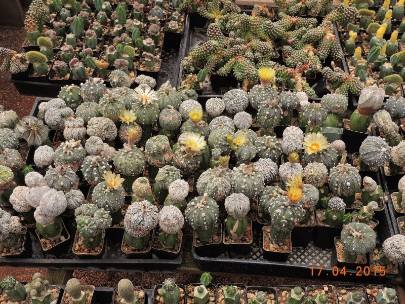 Cacti and Sukkulent in Köln, every day new flowers in the greenhouse Part 132 9163010