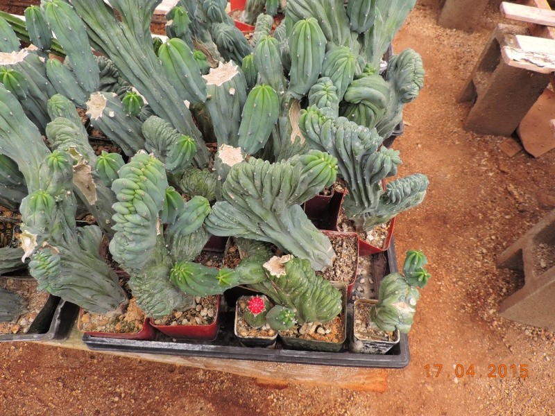 Cacti and Sukkulent in Köln, every day new flowers in the greenhouse Part 132 9163310