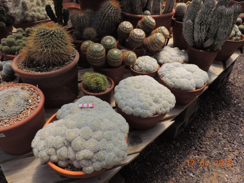 Cacti and Sukkulent in Köln, every day new flowers in the greenhouse Part 132 9168110