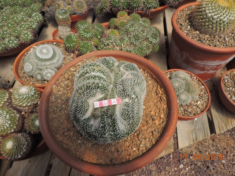 Cacti and Sukkulent in Köln, every day new flowers in the greenhouse Part 132 9168310
