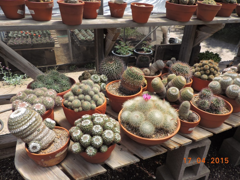 Cacti and Sukkulent in Köln, every day new flowers in the greenhouse Part 132 9169110