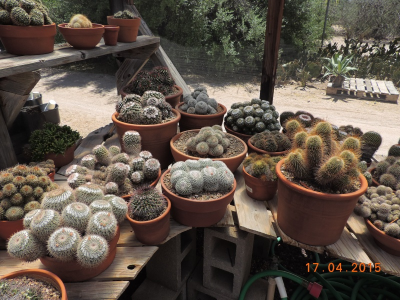 Cacti and Sukkulent in Köln, every day new flowers in the greenhouse Part 132 9169210
