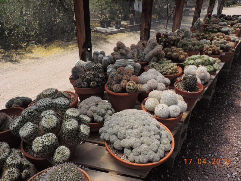 Cacti and Sukkulent in Köln, every day new flowers in the greenhouse Part 132 9169810
