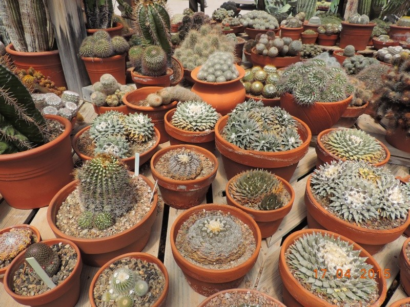 Cacti and Sukkulent in Köln, every day new flowers in the greenhouse Part 132 9171010