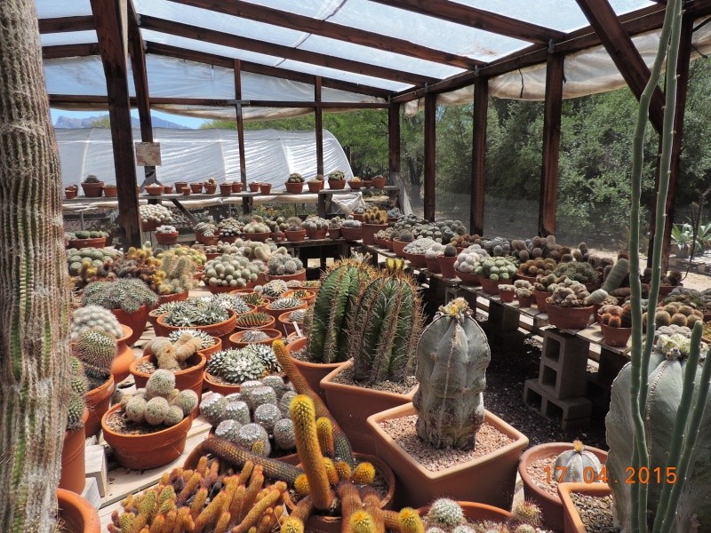 Cacti and Sukkulent in Köln, every day new flowers in the greenhouse Part 132 9171810