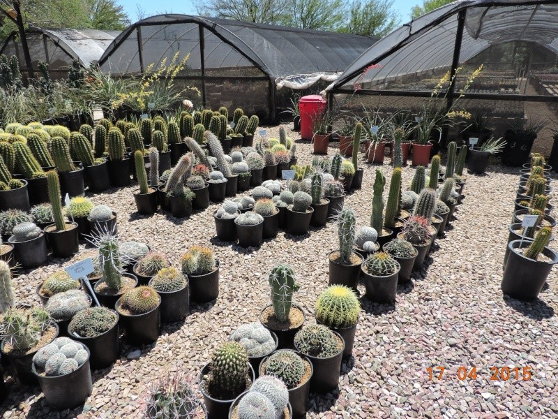 Cacti and Sukkulent in Köln, every day new flowers in the greenhouse Part 132 9172110