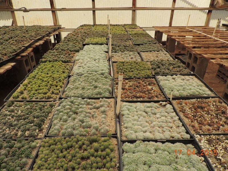 Cacti and Sukkulent in Köln, every day new flowers in the greenhouse Part 132 9173710