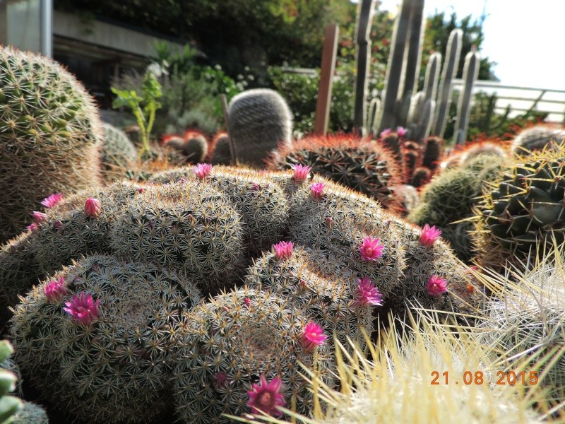 Cacti and Sukkulent in Köln, every day new flowers in the greenhouse Part 129 Bild_118