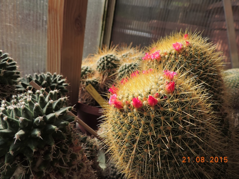 Cacti and Sukkulent in Köln, every day new flowers in the greenhouse Part 129 Bild_120