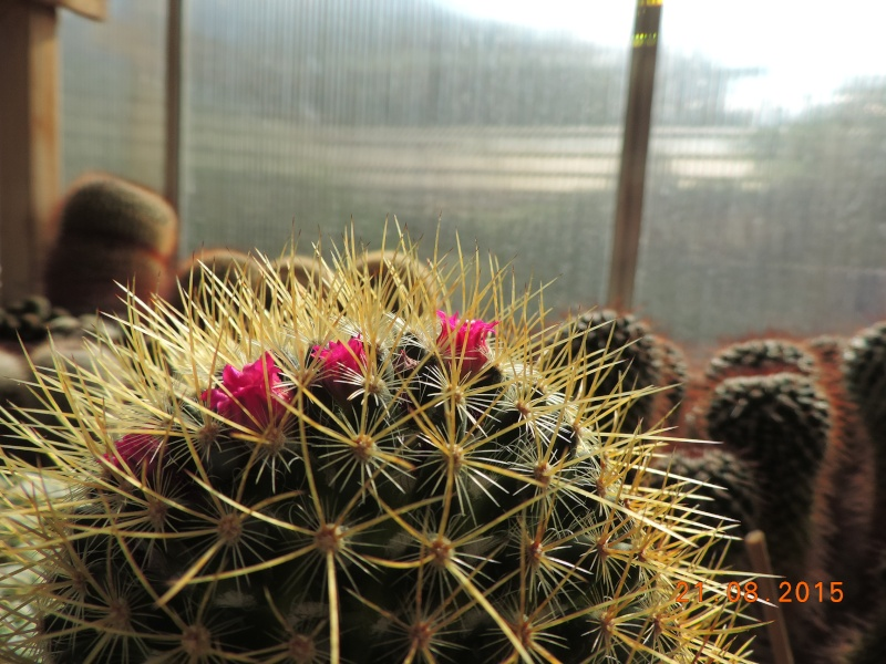 Cacti and Sukkulent in Köln, every day new flowers in the greenhouse Part 129 Bild_121