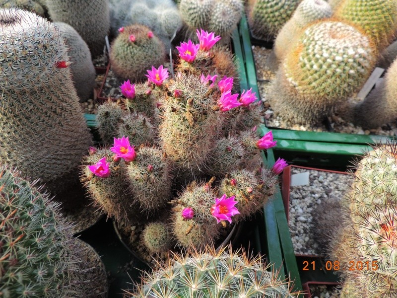 Cacti and Sukkulent in Köln, every day new flowers in the greenhouse Part 129 Bild_124