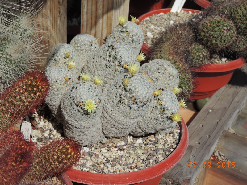 Cacti and Sukkulent in Köln, every day new flowers in the greenhouse Part 130 Bild_139