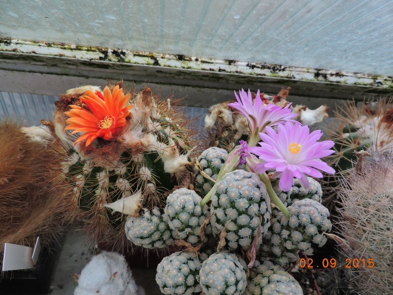 Cacti and Sukkulent in Köln, every day new flowers in the greenhouse Part 130 Bild_140