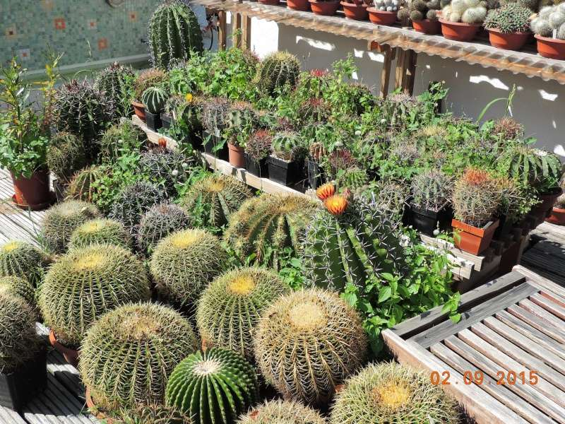 Cacti and Sukkulent in Köln, every day new flowers in the greenhouse Part 130 Bild_142