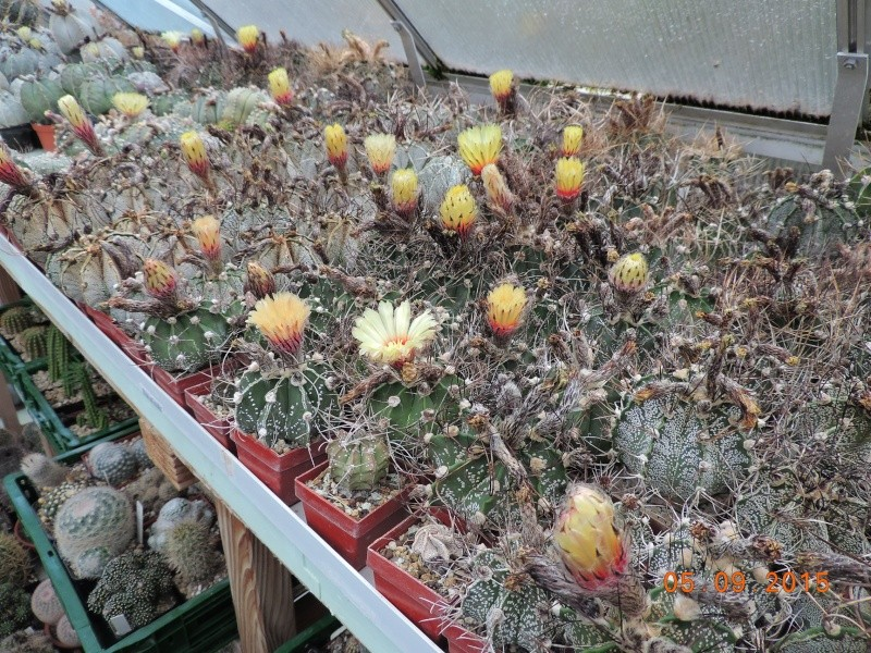 Cacti and Sukkulent in Köln, every day new flowers in the greenhouse Part 130 Bild_166