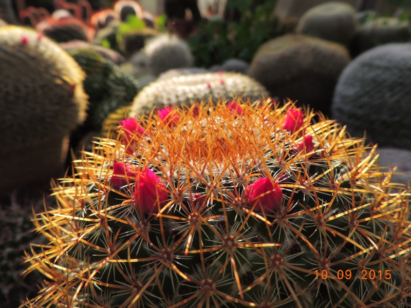 Cacti and Sukkulent in Köln, every day new flowers in the greenhouse Part 130 Bild_181