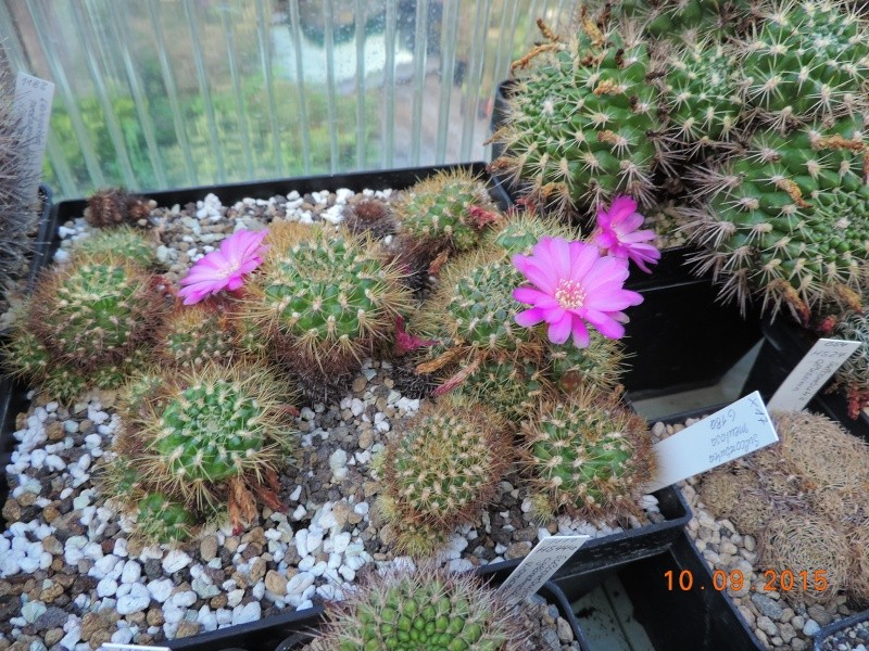 Cacti and Sukkulent in Köln, every day new flowers in the greenhouse Part 130 Bild_193