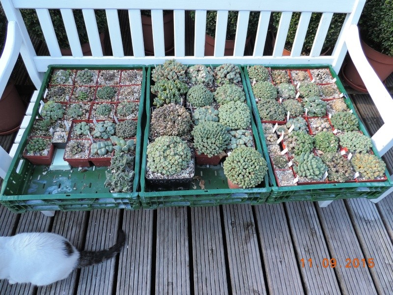 Cacti and Sukkulent in Köln, every day new flowers in the greenhouse Part 130 Bild_201