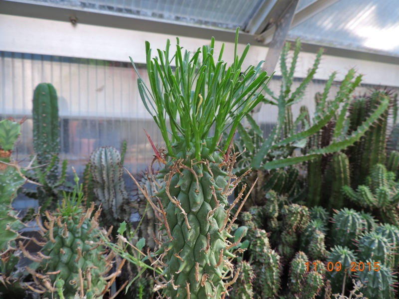 Cacti and Sukkulent in Köln, every day new flowers in the greenhouse Part 130 Bild_204