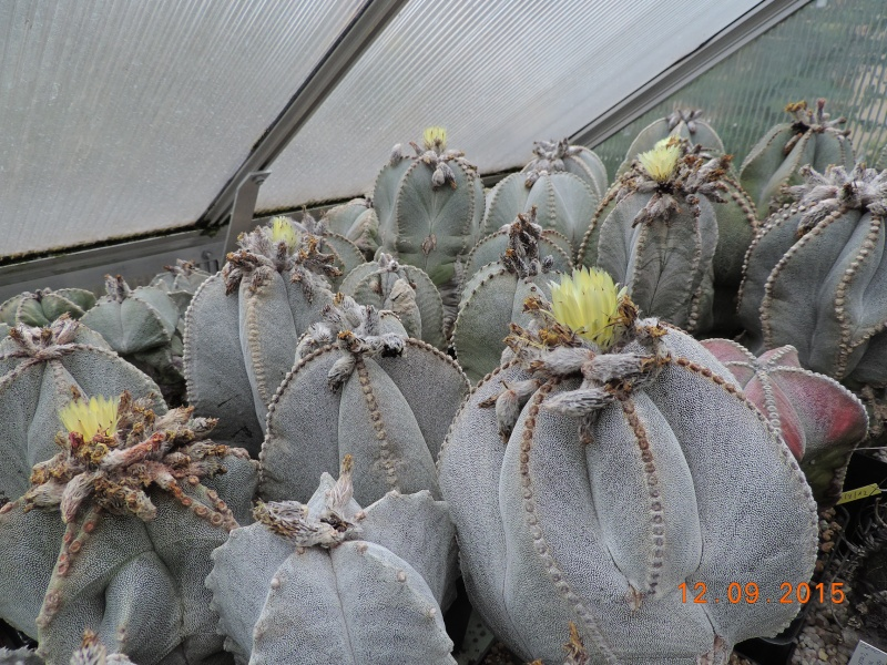 Cacti and Sukkulent in Köln, every day new flowers in the greenhouse Part 130 Bild_209