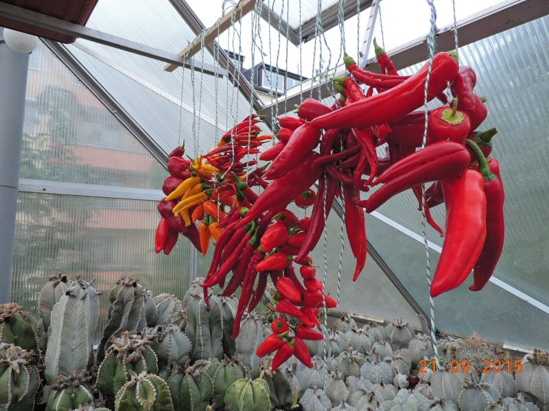 Cacti and Sukkulent in Köln, every day new flowers in the greenhouse Part 130 Bild_241