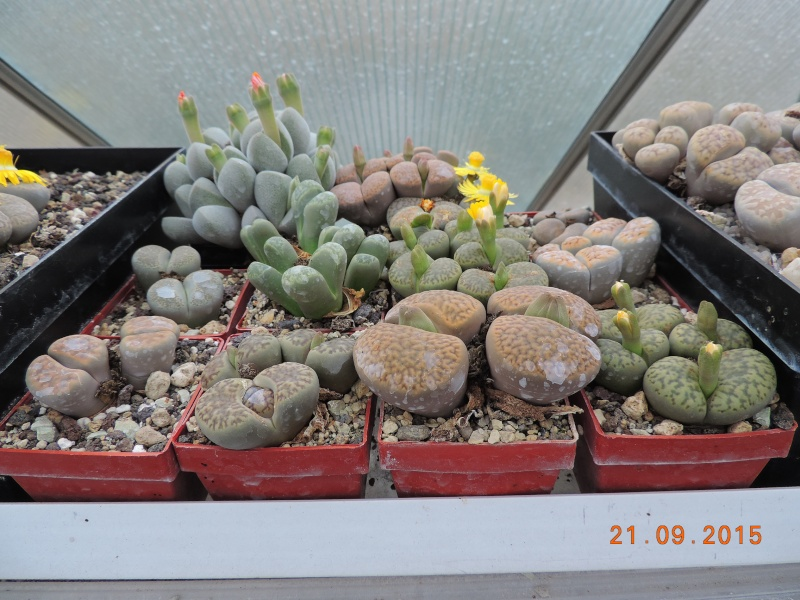 Cacti and Sukkulent in Köln, every day new flowers in the greenhouse Part 130 Bild_242