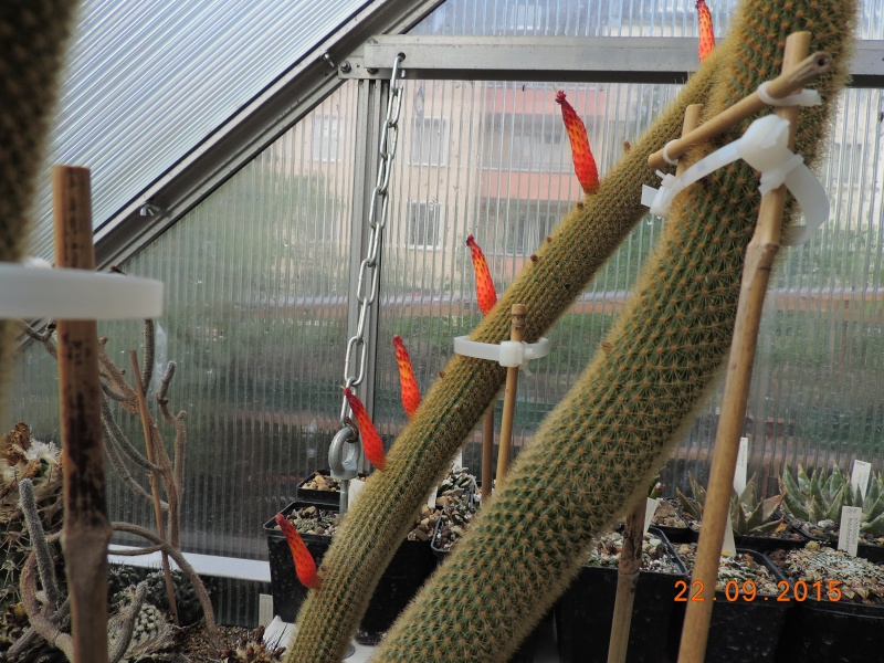 Cacti and Sukkulent in Köln, every day new flowers in the greenhouse Part 130 Bild_253