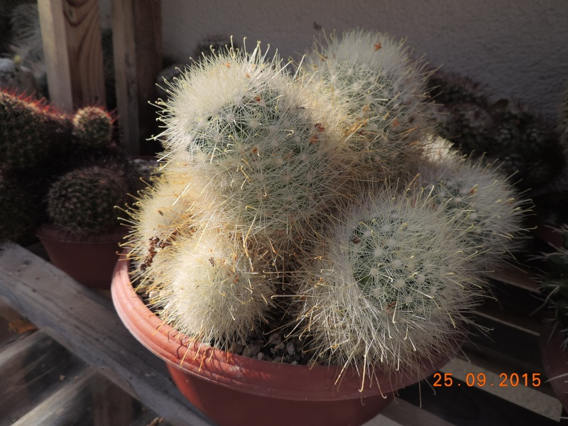 Cacti and Sukkulent in Köln, every day new flowers in the greenhouse Part 131 Bild_263