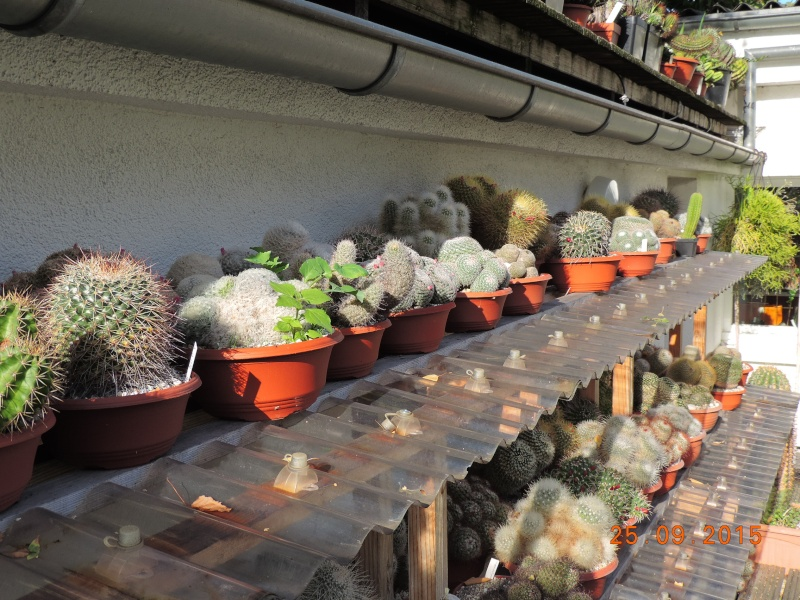 Cacti and Sukkulent in Köln, every day new flowers in the greenhouse Part 131 Bild_267